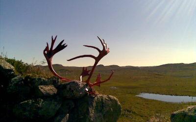 Jaktkvoter på Hardangervidda